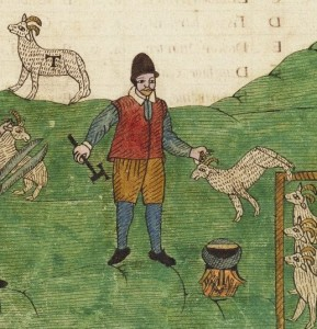 A shepherd shearing sheep. Trevilian Miscellaney, 1602